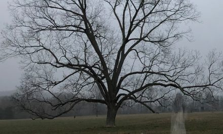 New For 2019: Southern Ghost Stories: Haunted History