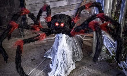 New For 2020: 21 Inch Red and Black Jumping Spider From Spirit Halloween